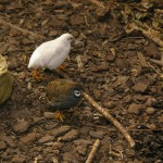 Små fåglar