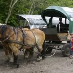 Hästar i Prerow, Darss