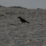 Mörk fågel