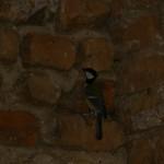 Fågel i Potsdam