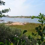 Gräsö-idyll med Örskär i bakgrunden till höger