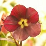 Mörk blomma med ljus bakgrund