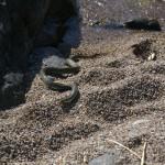 Någon sorts orm