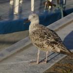 Ljusbrun fågel